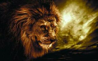 Lion Wallpaper Background HD 10227 Wallpaper Cool Walldiskpapercom