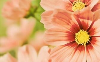 summer flowers wallpaper desktop   weddingdressincom