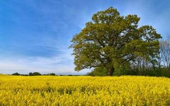 Swedish Fields Wallpapers HD Wallpapers