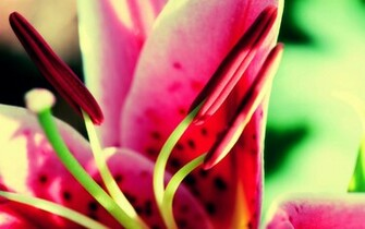 Flower Nature Wallpapers HD Wallpapers