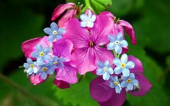 Wallpaper Spring Flowers Wallpupcom