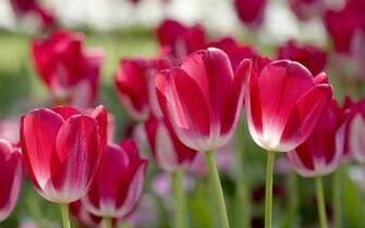 Spring Flowers Wallpapers   Nature Wallpapers
