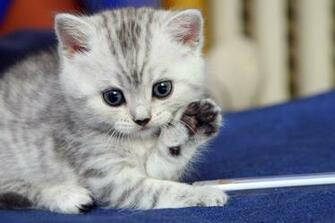 Cute Animal Cat Wallpaper Hd One plus Wallpapers