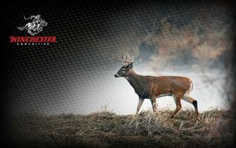 1680x1050 deer1
