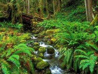 Stream Olympic National Park Washington Wallpaper   HQ Wallpapers