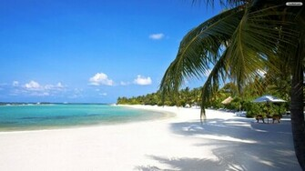 Amazing Tropical Beach Wallpaper   wallpaperwallpapersfree wallpaper