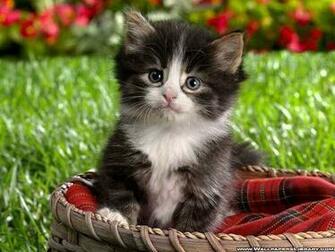 Kittens images Cute Kitten wallpaper photos 12930610