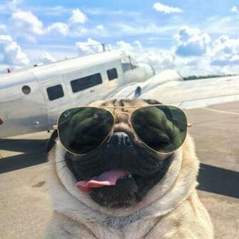25 times Doug the Pug made us question our life choices   DogBuddy