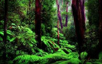 AMAZON FOREST wallpaper   ForWallpapercom