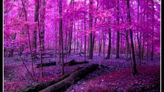 PINK NATURE WALLPAPER   75188   HD Wallpapers   [wallpapersinhqpw]