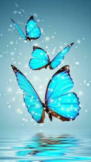 aqua butterfly hd wallpaper Beautiful Wallpaper Butterfly