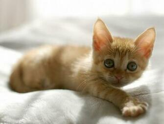 1600x1200 Cute Orange Kitten desktop PC and Mac wallpaper