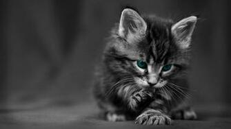 Cute Black Cat HD Desktop Wallpaper HD Desktop Wallpaper