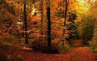 Fall Full HD Wallpaper and Background 2560x1600 ID165266