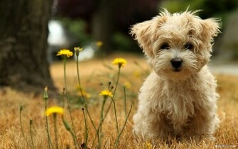 wallpaper cute animal dog backgrounds 1920x1200