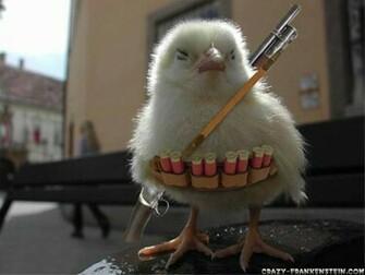 Funny Animals funny chicken