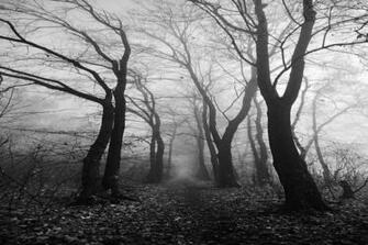 Pics Photos   Nature Black And White Wallpaper Widesktop