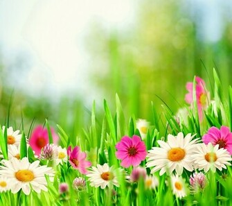 Spring Meadow HD HD Samsung Galaxy S5 Wallpapers free download