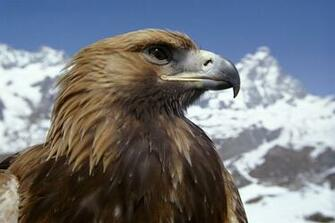 Animal Planet images Eagle HD wallpaper and background