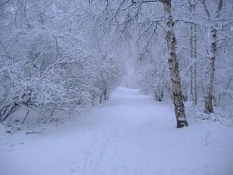 Winter Scene Wallpaper
