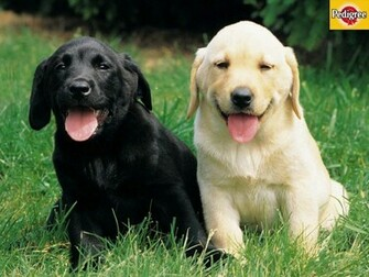 More Dog and Puppy wallpapers from Pedigree