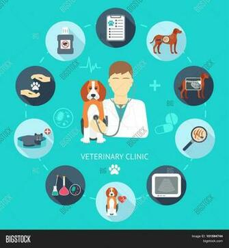 Veterinary Flat Icon Vector Photo Trial Bigstock