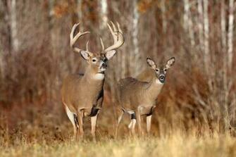 Deer Photos HD Wallpapers Download Wallpapers in HD for your