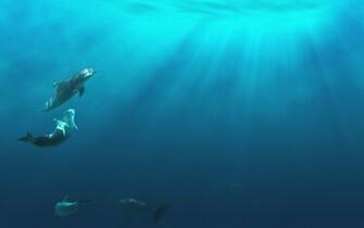 ocean life underwater ocean floor background ocean water background