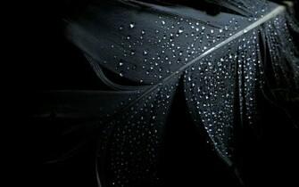 Black Dark Wallpaper 1920x1200 Black Dark Feathers