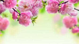 Spring background download