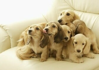 Cute Dogs HD Wallpapers Set 1