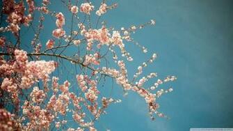 HD Wallpaper Beautiful Spring Spring wallpaper hd Spring
