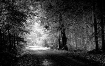 forest background black and white hd wallpapers Car Pictures