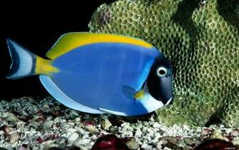 Blue Cool Fish Wallpapers   7997