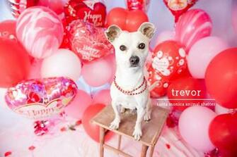 Valentines Day Shelter Dogs Cats Awwwww   Democratic