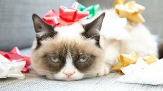Grumpy Cat Meme Funny HD Wallpaper of Animals   hdwallpaper2013com