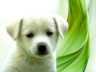 puppies wallpapers display puppies wallpapers cute puppies wallpapers