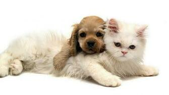 wallpaper you are viewing the animals wallpaper named cute puppy cat