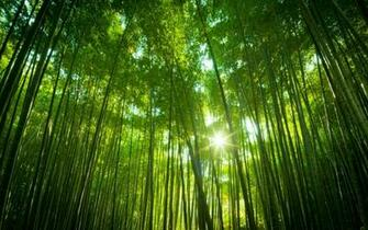 Japanese Bamboo Forest Wallpapers HD Wallpapers