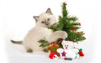 Christmas Animals Wallpapers