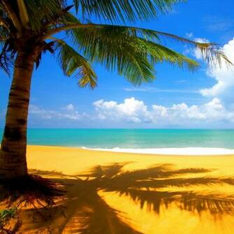 beach animated wallpaper windows 7 With Resolutions 10241024 Pixel