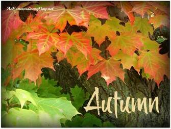 AnExtraordinaryDaynet First Day of Autumn Barely turning Maple