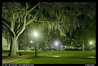 night with Spanish Moss hanging from oak trees Savannah Georgia USA