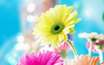 Download Best HD Wallpapers Most Beautiful Flower Wallpaper