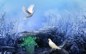Pigeons Nature Flowers Colors Paint HD Wallpapers Love Wallpapers