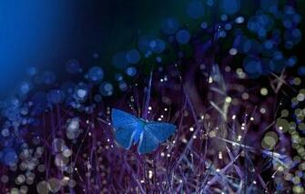 Wallpaper grass macro night butterfly bokeh Eleonora Di Primo