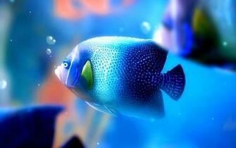 Beta Fish Wallpaper wallpaper Beta Fish Wallpaper hd wallpaper