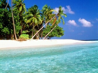 Fantastic beach wallpaper with palm tress and wonderful fresh water