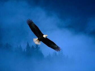 Flight of Freedom Bald Eagle Wallpapers HD Wallpapers