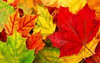 Autumn Leaves Desktop Wallpapers   Wallpaper High Definition High